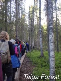 Anna in Russia: Taiga Forest
